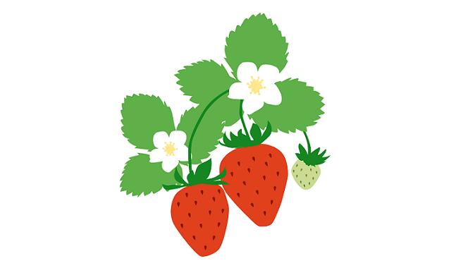 strawberry001